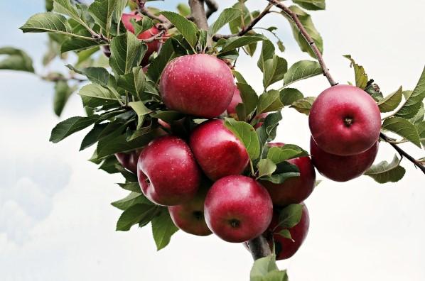 manzanas para la salud